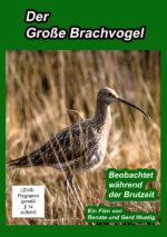 Der Große Brachvogel